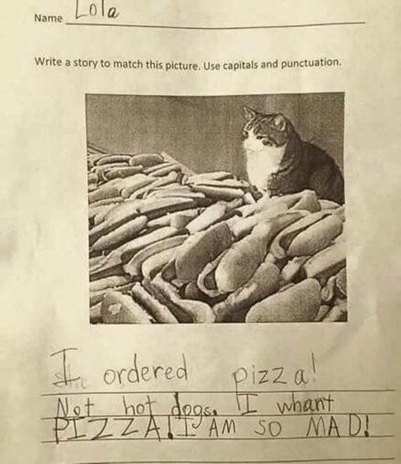 cat pizza funny - 9317896448