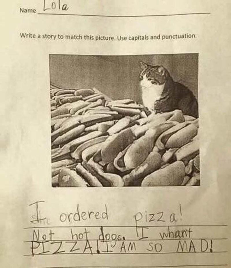 cat pizza funny - 9317896448