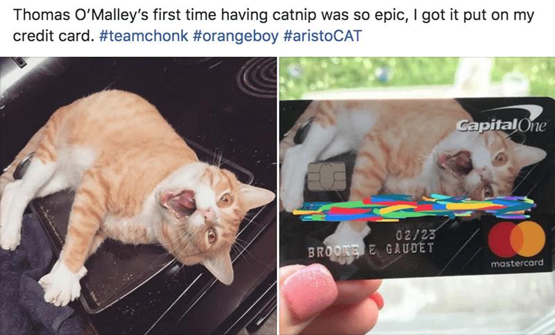 credit card Cats funny - 9317899520
