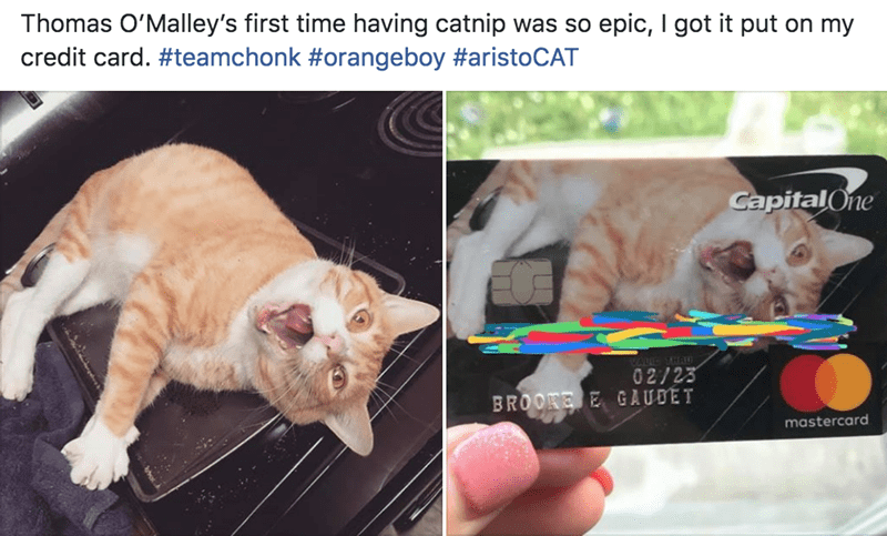 credit card Cats funny - 9317899520