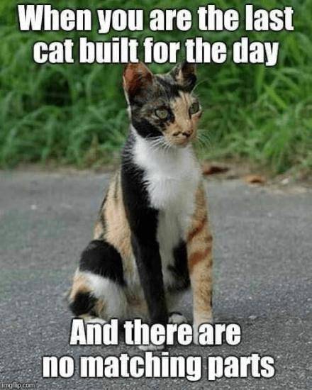 cat meme funny - 9317902080