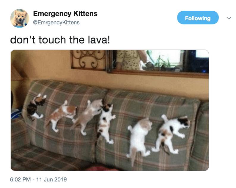 cute tweet Cats - 9317912832