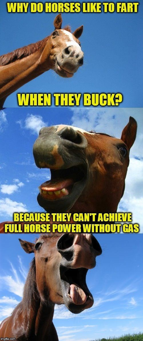 Snout - WHY DO HORSES LIKE TO FART WHEN THEY BUCK? BECAUSE THEY CANT ACHIEVE FULL HORSE POWER WITHOUT GAS imgflip.com