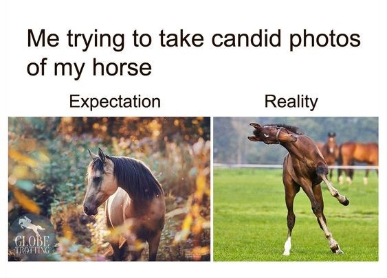 Horses Me trying to take candid photos of my horse Expectation Reality GLOBE TROFTING