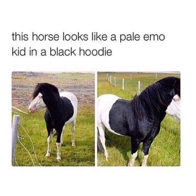 Horse - this horse looks like a pale emo kid in a black hoodie