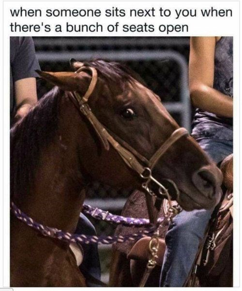 Horse - when someone sits next to you when there's a bunch of seats open