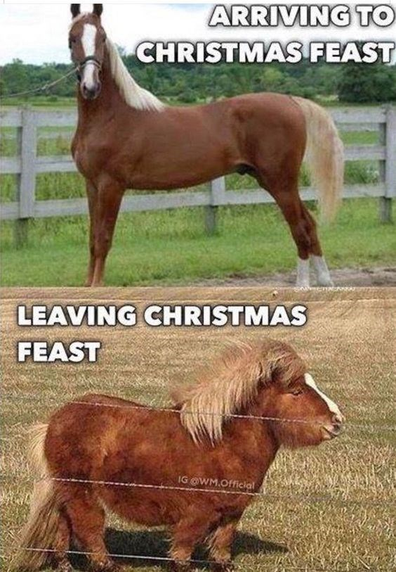 Horse - ARRIVING TO CHRISTMAS FEAST LEAVING CHRISTMAS FEAST IG @WM.Official