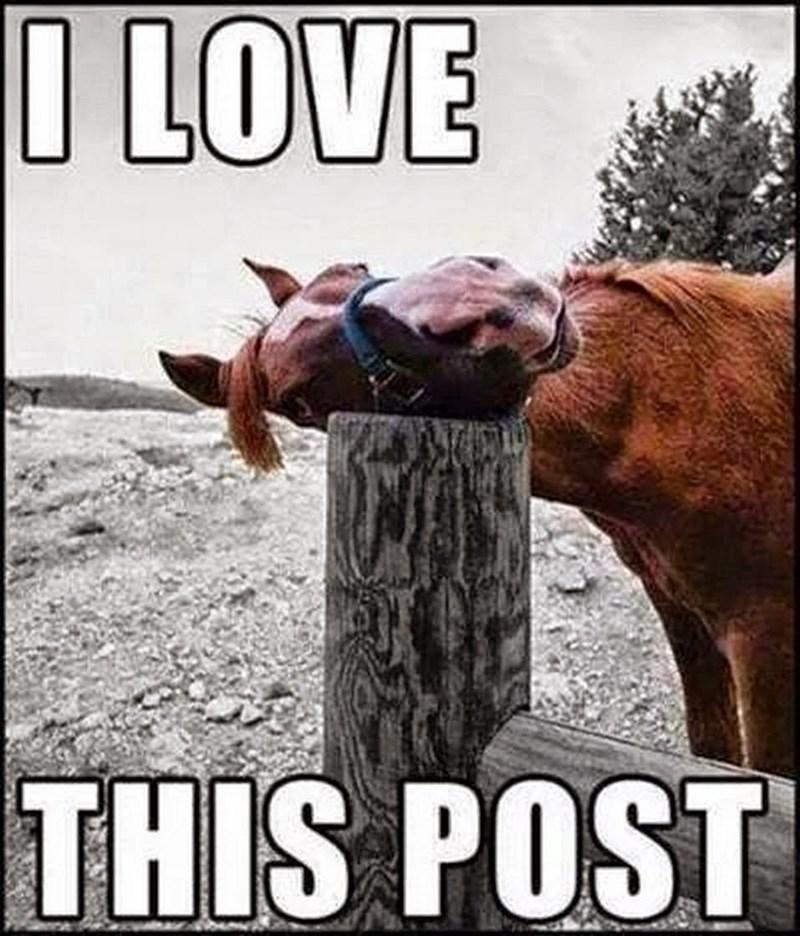Photo caption - O LOVE THIS POST
