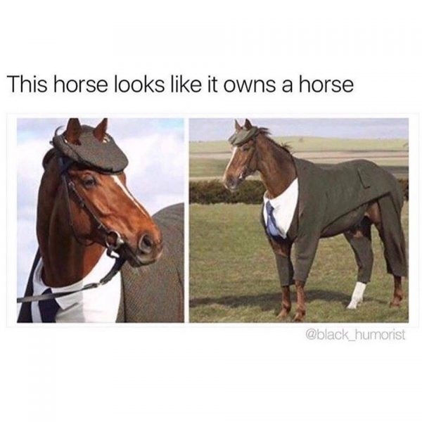Horse - This horse looks like it owns a horse @black humorist