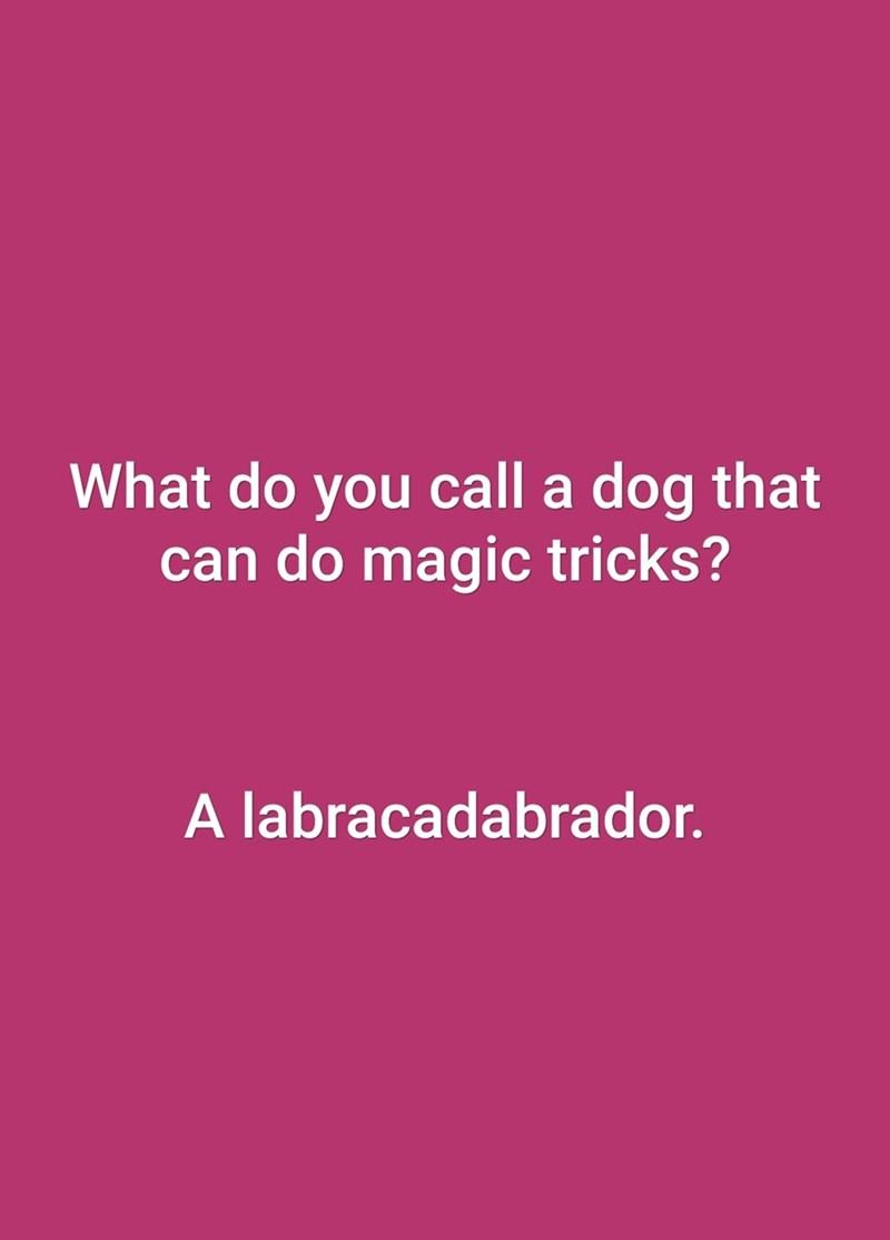 Text - What do you call a dog that can do magic tricks? A labracadabrador