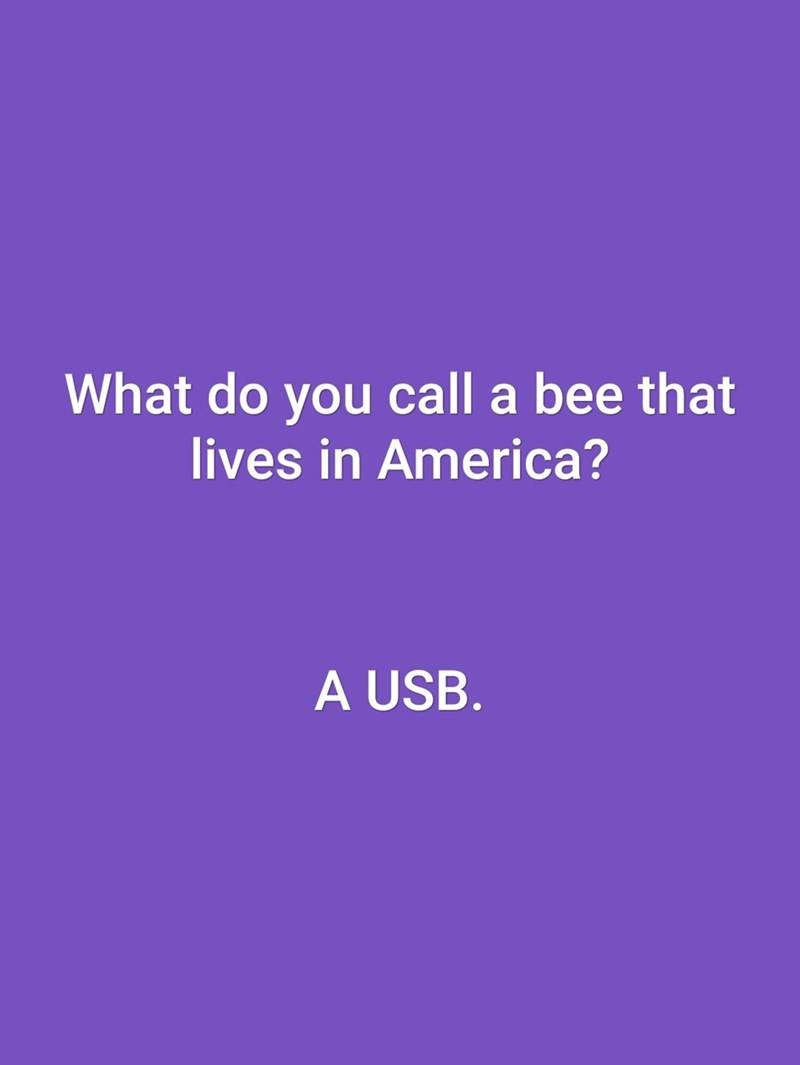 Text - What do you call a bee that lives in America? A USB.