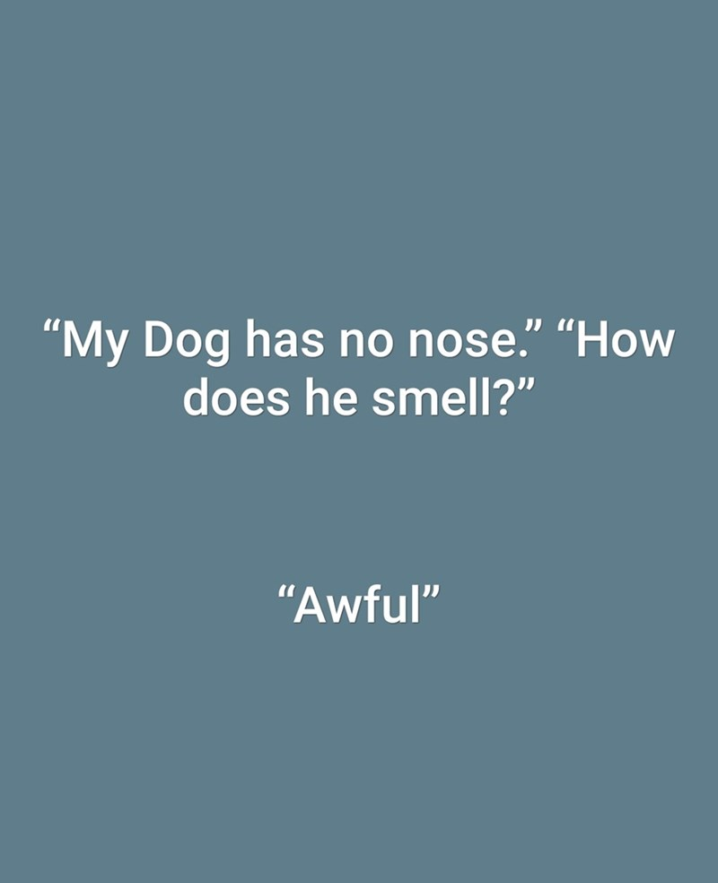 "dad joke - Text - ""My Dog has no nose."" ""How does he smell?"" ""Awful"""