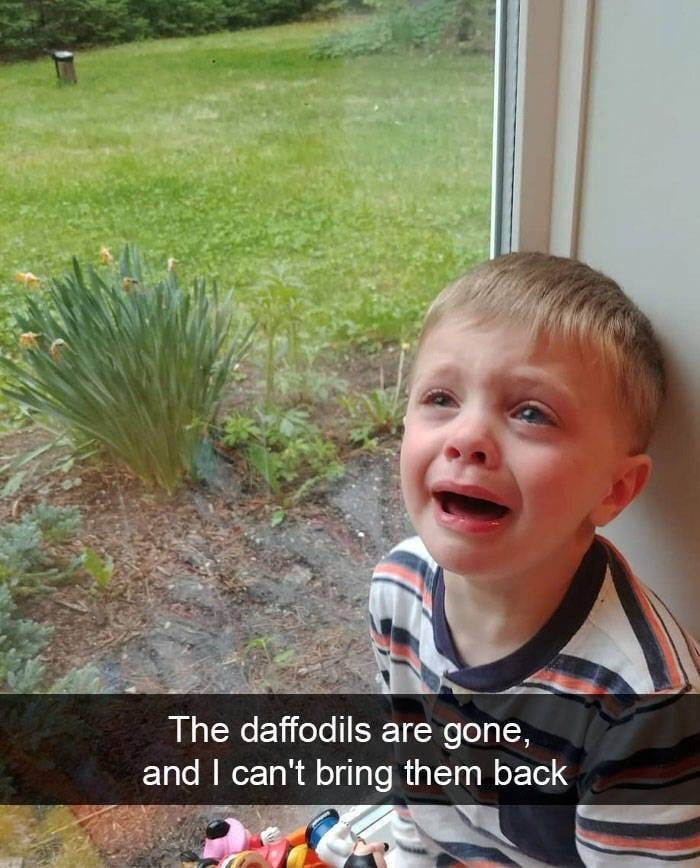 child crying because there are no daffodils