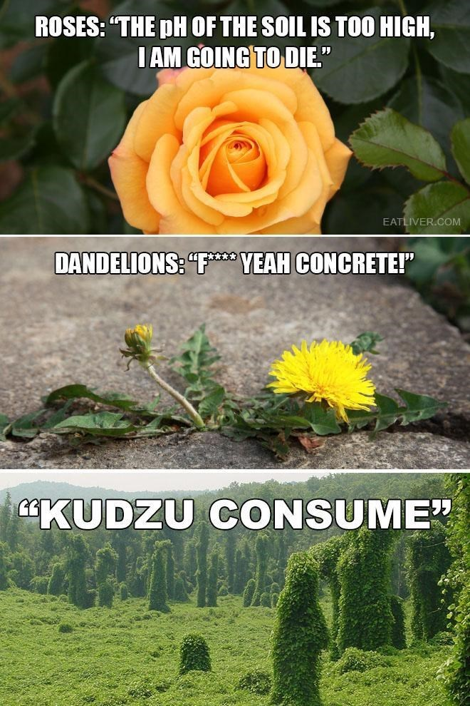 """Text - Nature - ROSES: """"THE pH OF THE SOIL IS TO0 HIGH, IAM GOING TO DIE."""" EATLIVER.COM DANDELIONS: """"F YEAH CONCRETE!"""" KUDZU CONSUME"""
