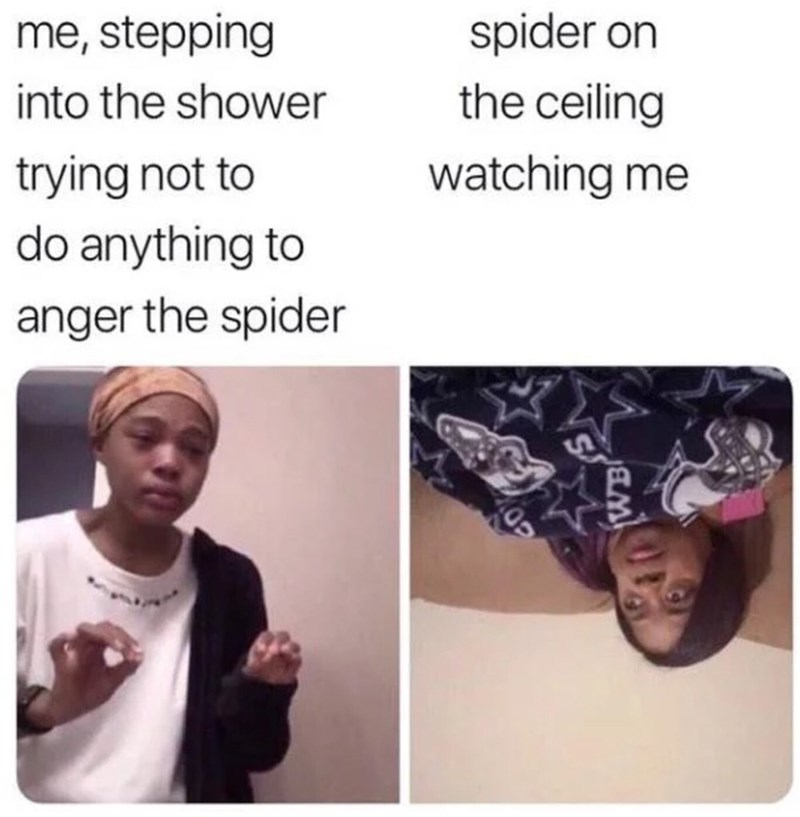 memes - Face - spider on me, stepping the ceiling into the shower trying not to watching me do anything to anger the spider