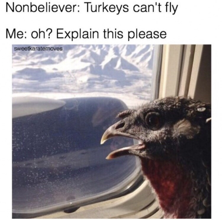 memes - Bird - Nonbeliever: Turkeys can't fly Me: oh? Explain this please sweetkaratemoves