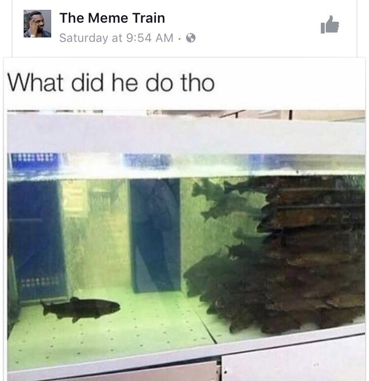 memes - Adaptation - The Meme Train Saturday at 9:54 AM What did he do tho