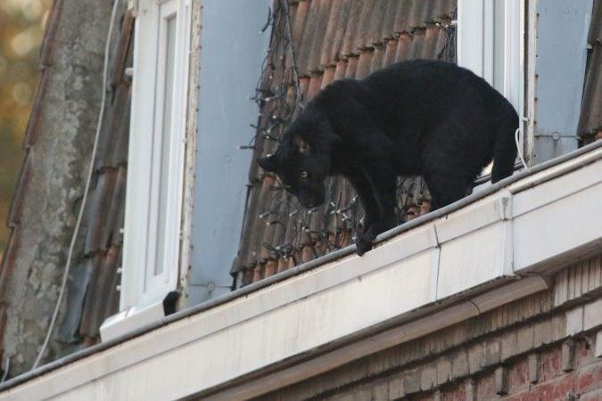 black panther france rooftops