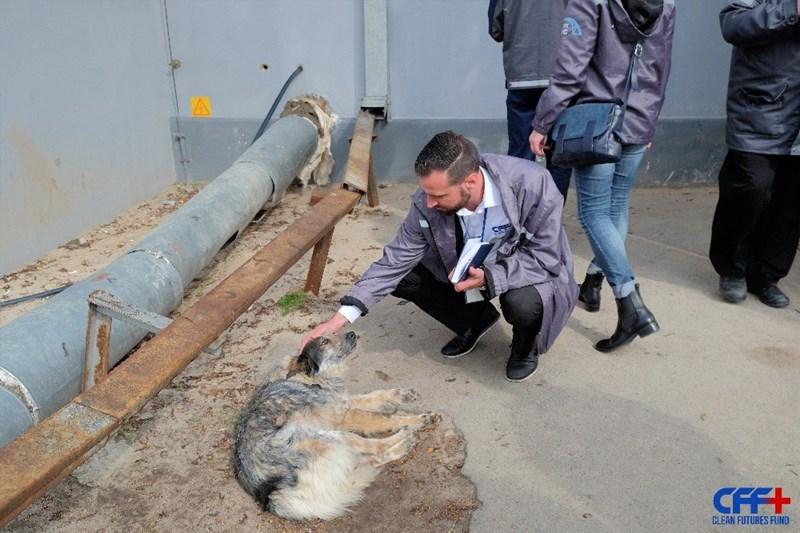 chernobyl animals - CFFH CLEAN FUTURES FUND