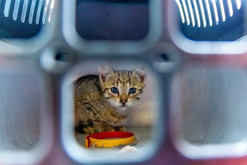 chernobyl animals - Cat