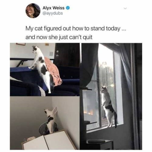 Alyx Weiss @ayydubs My cat figured out how to stand today and now she just can't quit