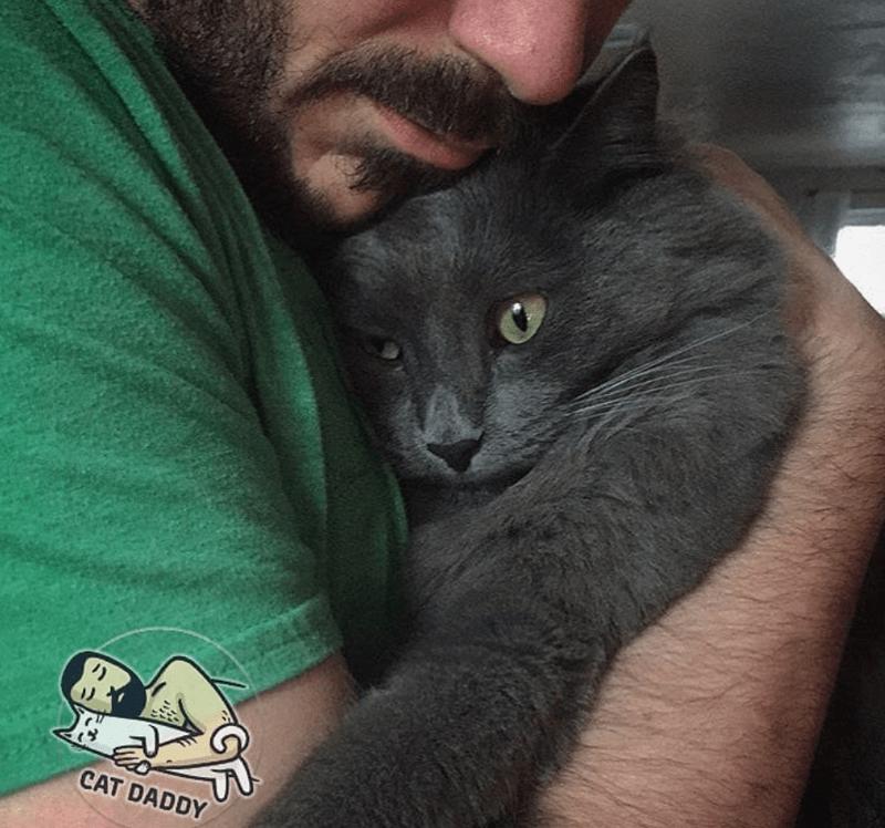 Cat - CAT DADDY