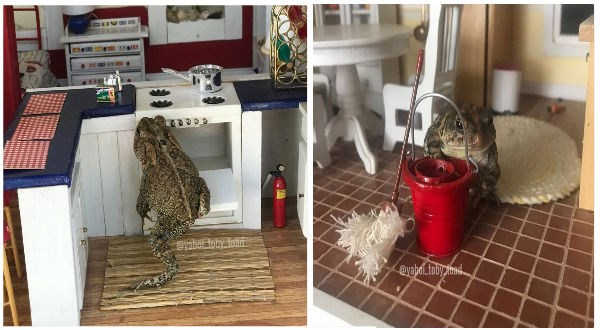 toad instagram dollhouse funny animals animals - 9318405