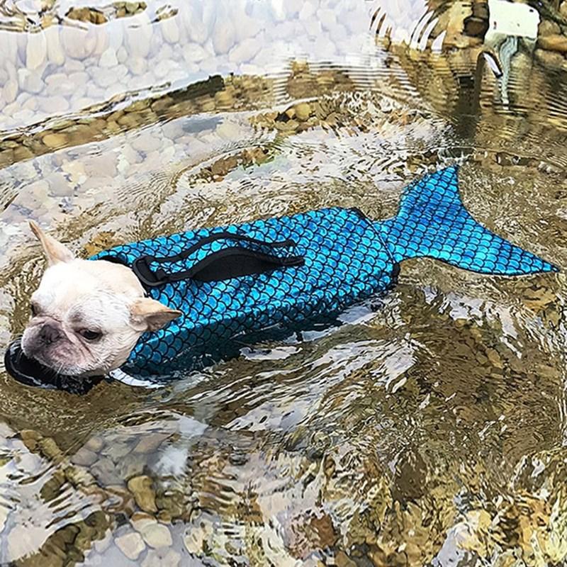 Dog with lifejacket - pug
