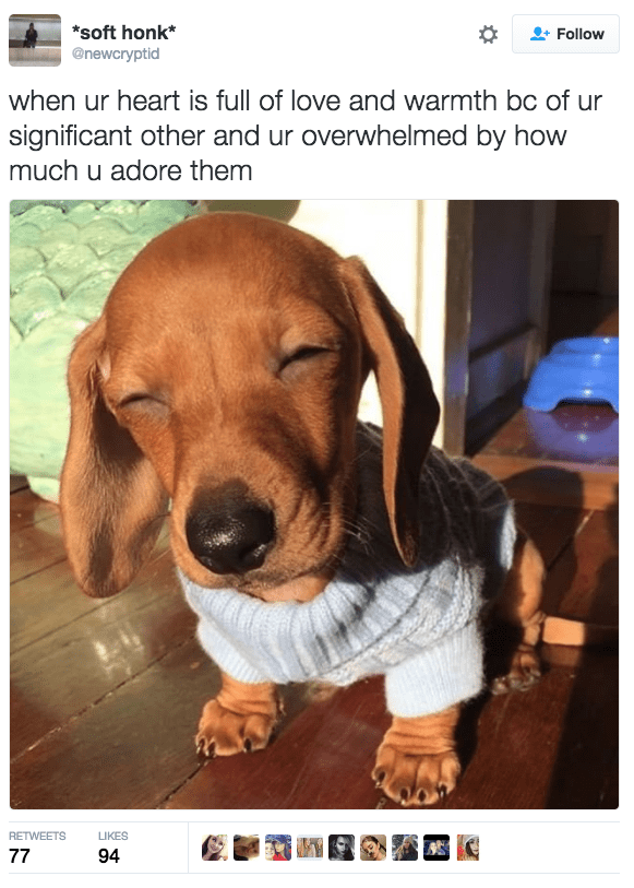 aww dogs cute love - 9318462464
