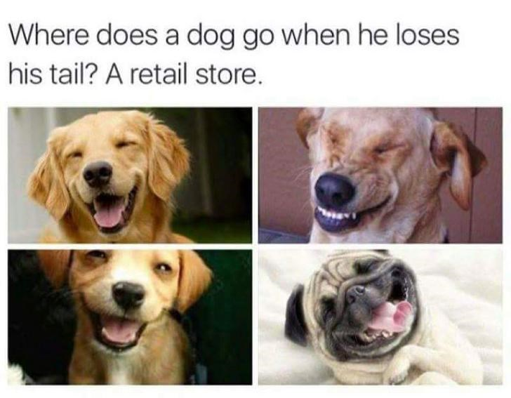 dogs dog jokes joke punny - 9318462976