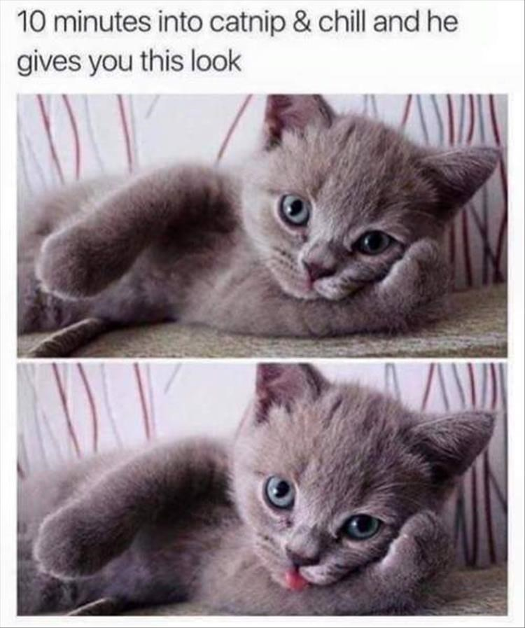 cat catnip cute netflix and chill chill funny cat memes - 9318494976