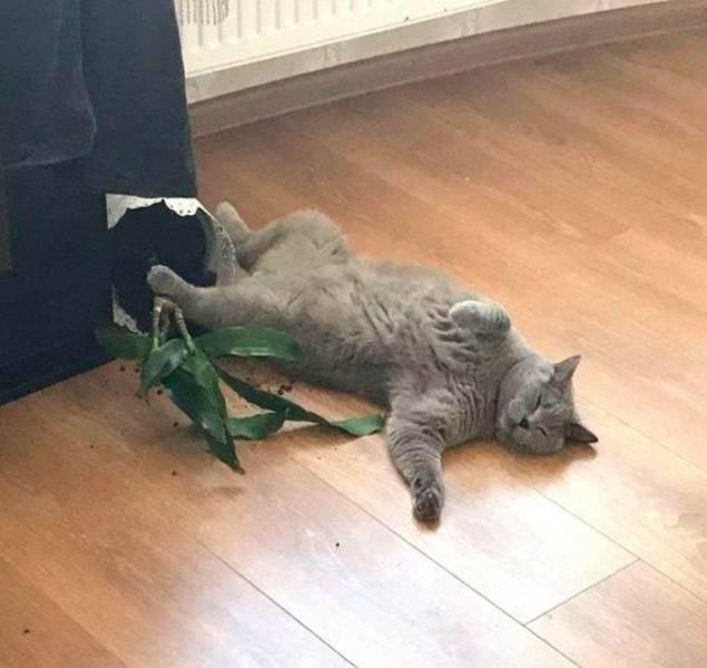 mildly interesting - Cat