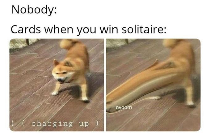 dank memes - Canidae - Nobody: Cards when you win solitaire: nyoom charging up)