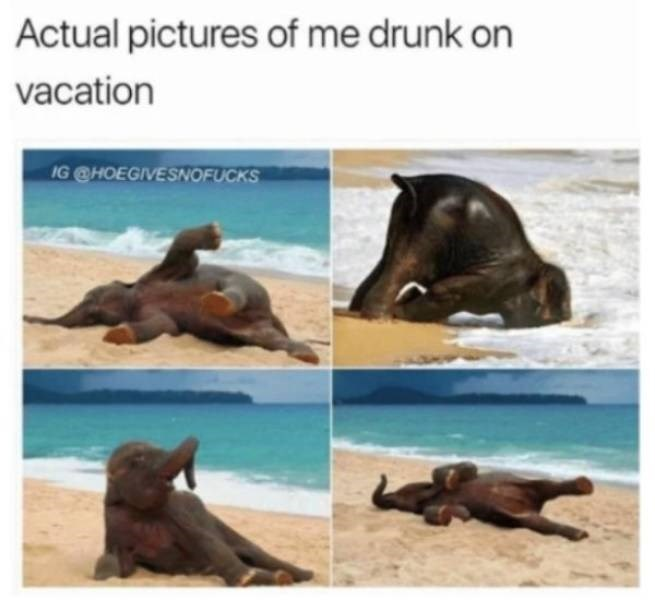 memes - California sea lion - Actual pictures of me drunk on vacation IG @HOEGIVESNOFUCKS