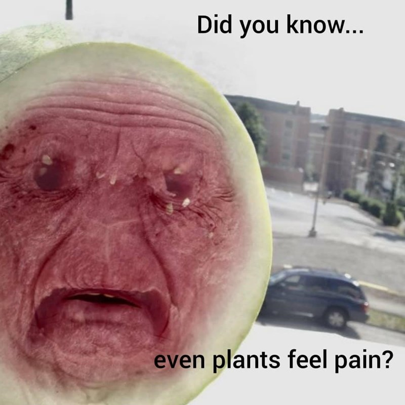 Face - Did you know... even plants feel pain?