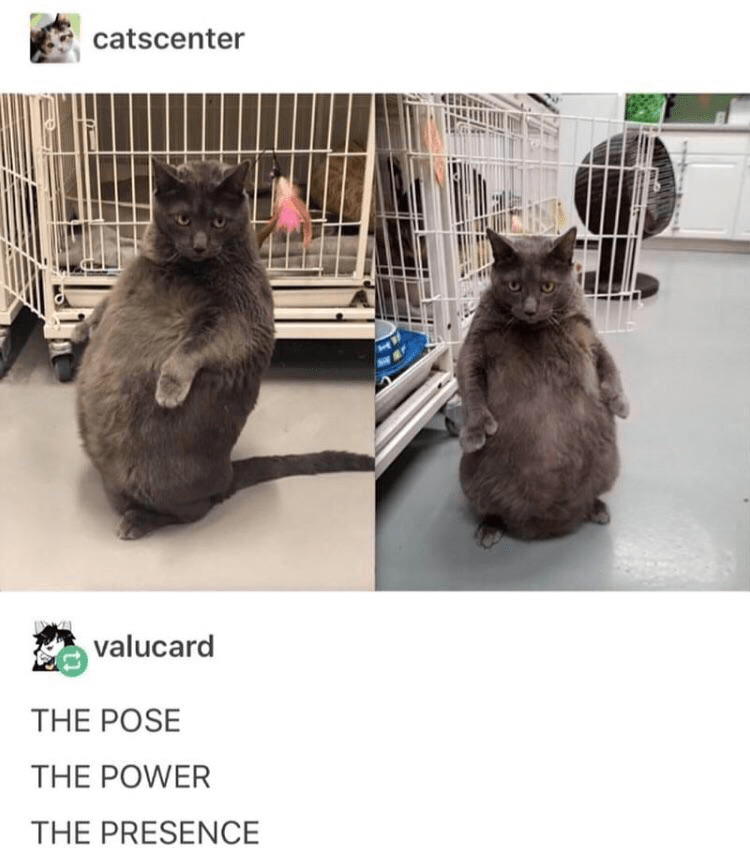 memes - Cat - catscenter valucard THE POSE THE POWER THE PRESENCE