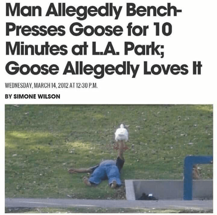 memes - Text - Man Allegedly Bench- Presses Goose for 10 Minutes at L.A. Park; Goose Allegedly Loves It WEDNESDAY,MARCH 14,2012 AT 12:30 P.M. BY SIMONE WILSON