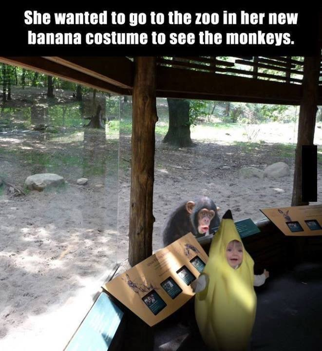 memes - Tree - She wanted to go to the zoo in her new banana costume to see the monkeys.