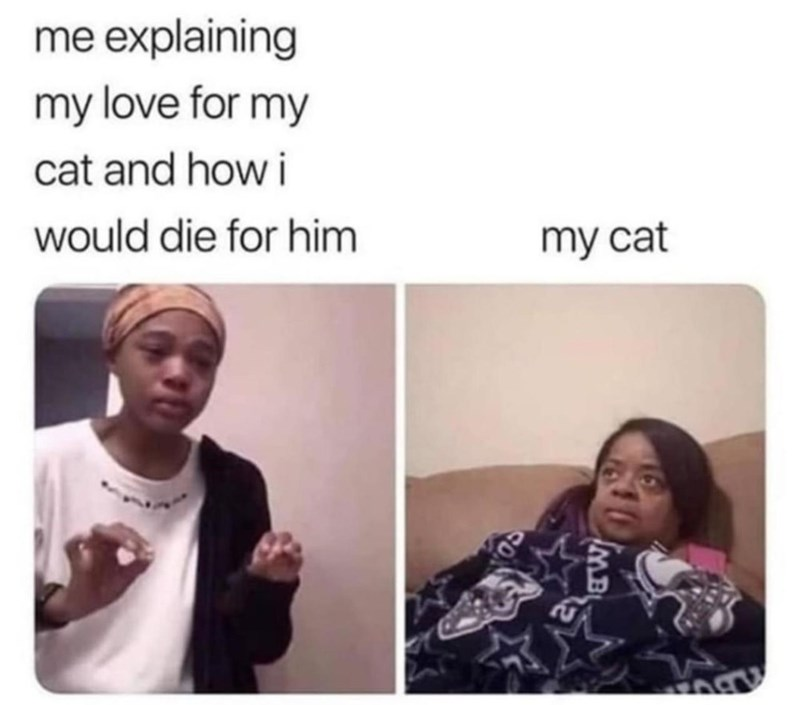 memes - Face - me explaining my love for my cat and how i would die for him my cat MB