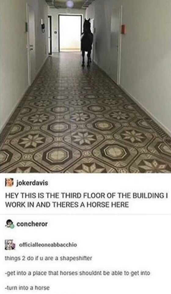 Floor - jokerdavis HEY THIS IS THE THIRD FLOOR OF THE BUIL WORK IN AND THERES A HORSE HERE concheror officialleoneabbacchio things 2 do if u are a shapeshifter -get into a place that horses shouldnt be able to get into -turn into a horse
