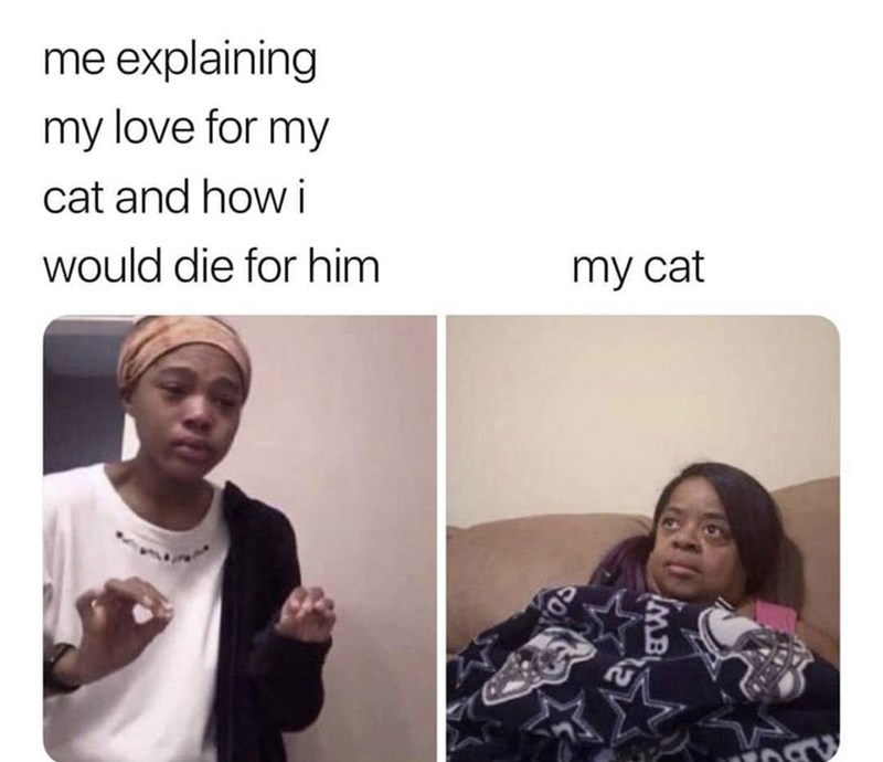 Face - me explaining my love for my cat and how i would die for him my cat