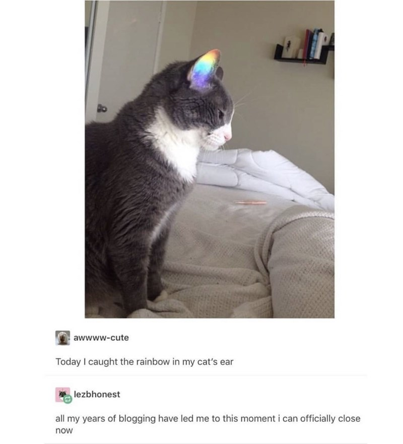 Cat - awwww-cute Today I caught the rainbow in my cat's ear lezbhonest all my years of blogging have led me to this moment i can officially close now