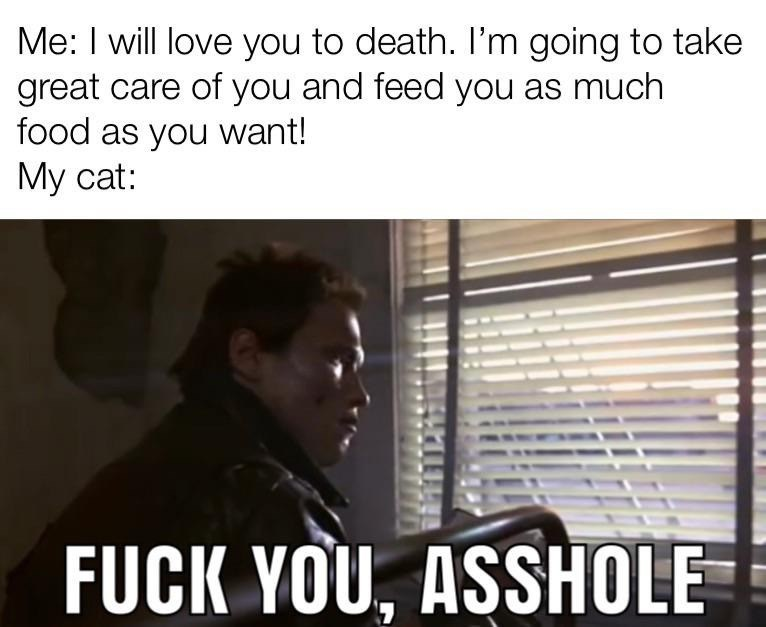 Text - Me: I will love you to death. I'm going to take great care of you and feed you as much food as you want! My cat: FUCK YOU, ASSHOLE