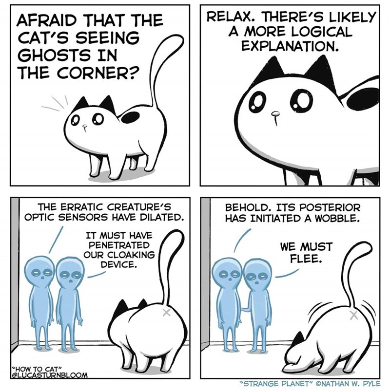 Funny cat comic about a cat seeing ghosts in the corner
