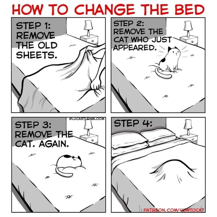 Funny cat comic about how to change the bed sheets as a cat owner