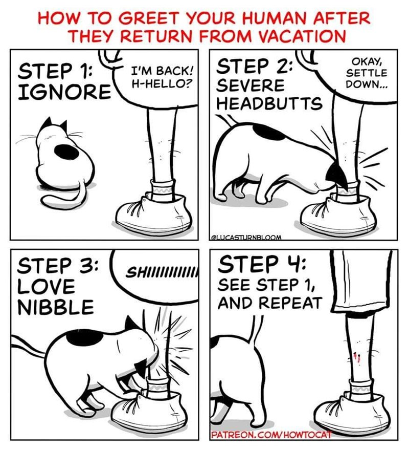 Funny cat comic about how cats greet humans