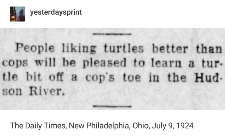 meme - Text - yesterdaysprint People liking turtles better than cops wil be pleased to learn a tur tle bit off a cop's toe in the Hud son River The Daily Times, New Philadelphia, Ohio, July 9, 1924