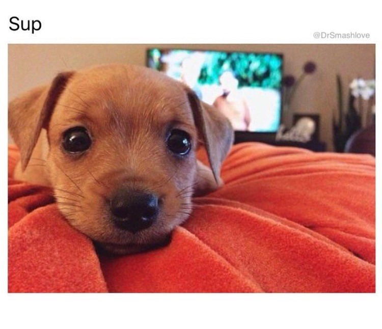 funny meme - Dog - Sup @DrSmashlove