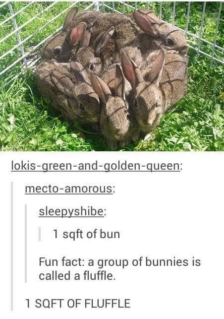 funny meme - Tree - lokis-green-and-golden-queen: mecto-amorous: sleepyshibe: 1 sqft of bun Fun fact: a group of bunnies is called a fluffle 1 SQFT OF FLUFFLE
