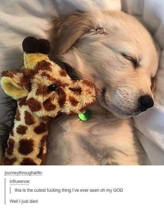 funny meme - Mammal - journeythroughalife: influxence: this is the cutest fucking thing I've ever seen oh my GOD Well I just died